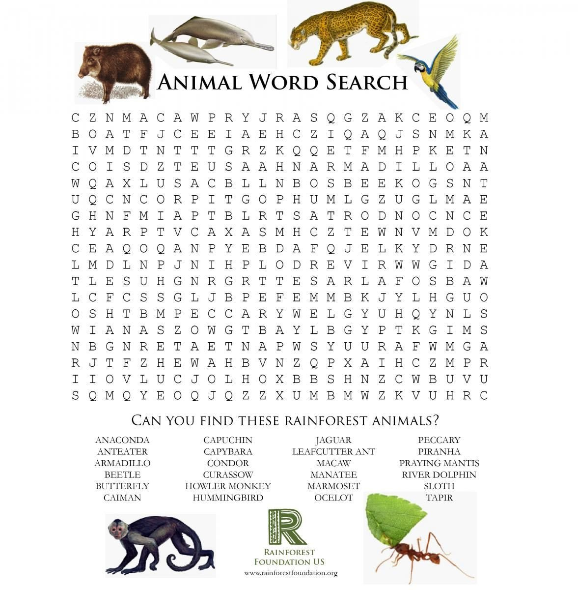 Rainforest Worksheets for Kindergarten Animal Word Search