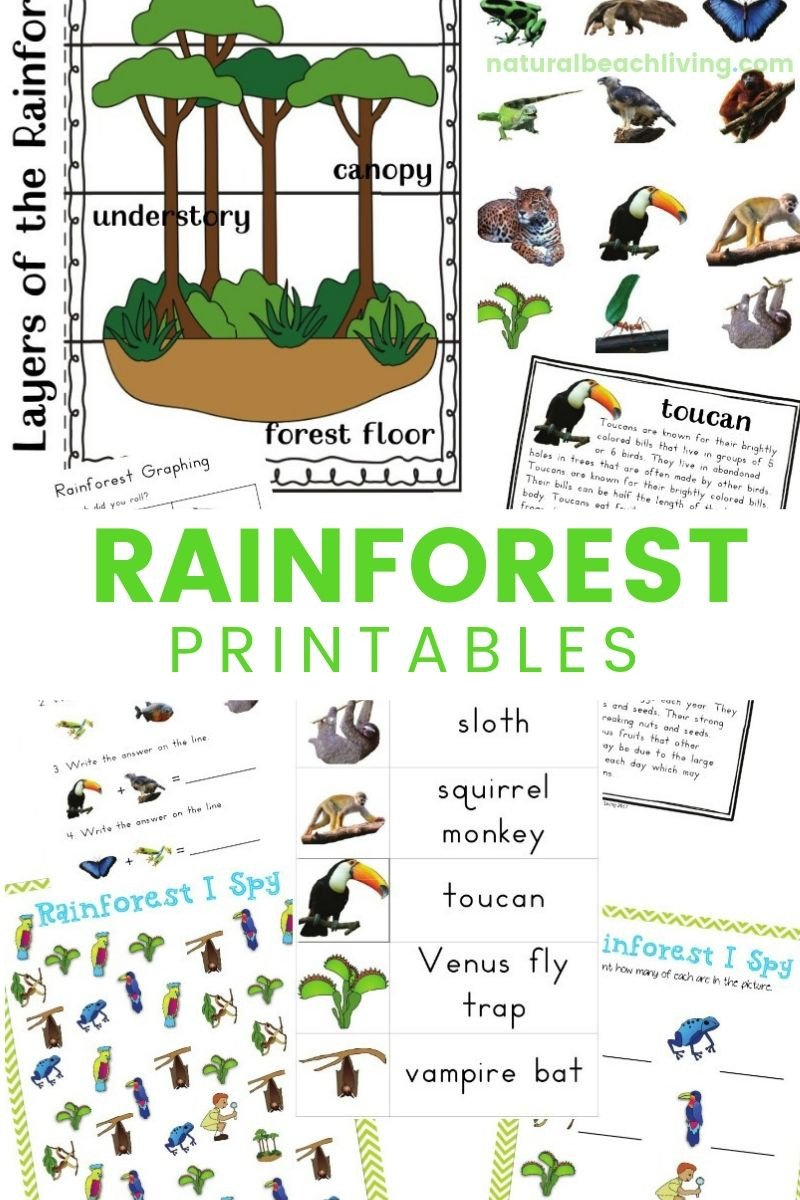 Rainforest Worksheets for Kindergarten Rainforest Lesson Plans and Rainforest Activities for Kids