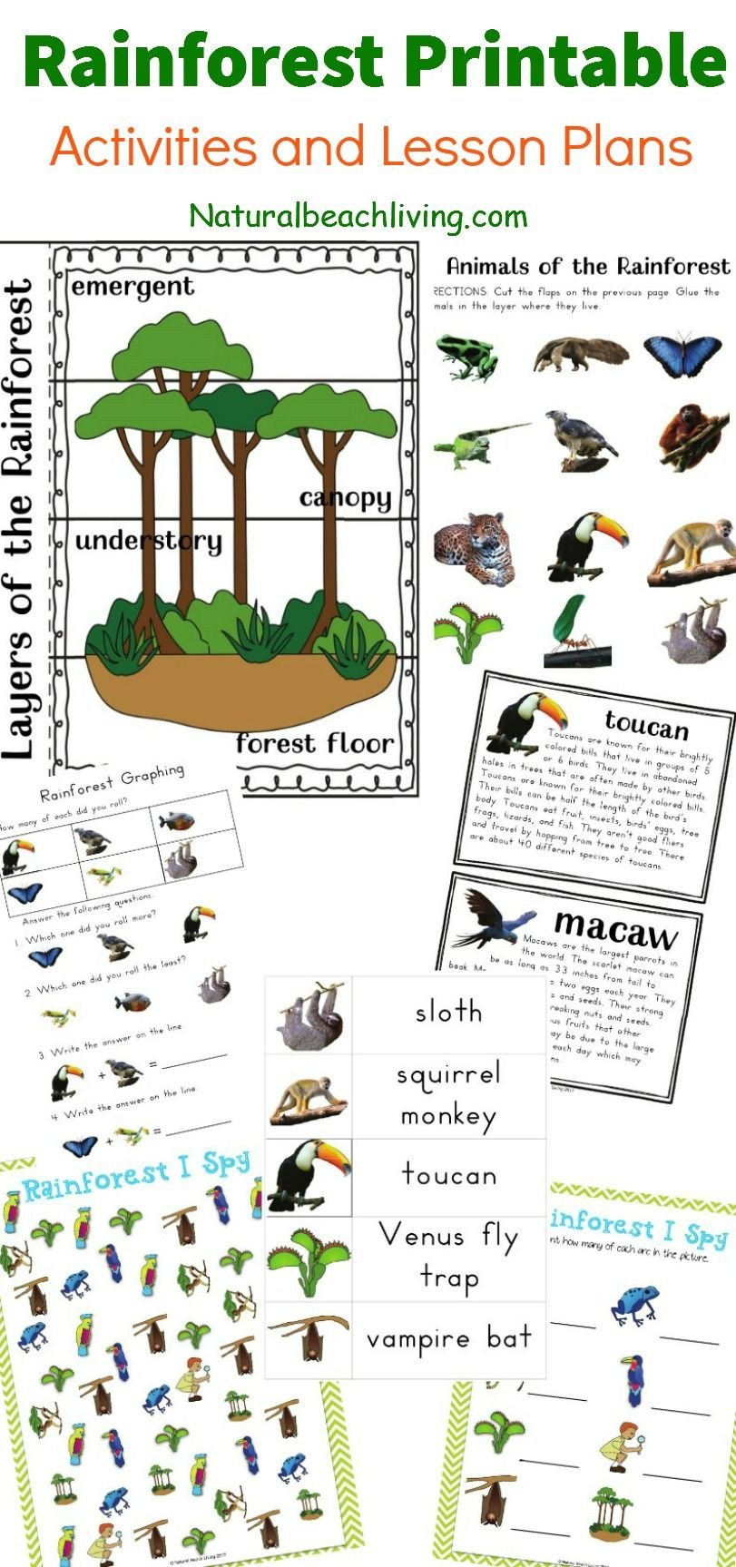 The Best Rainforest Printable Activities for Kids Natural