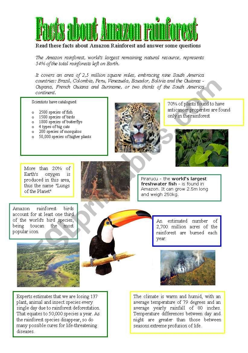 Rainforest Worksheets Free Facts About Amazon Rainforest Esl Worksheet by athos466
