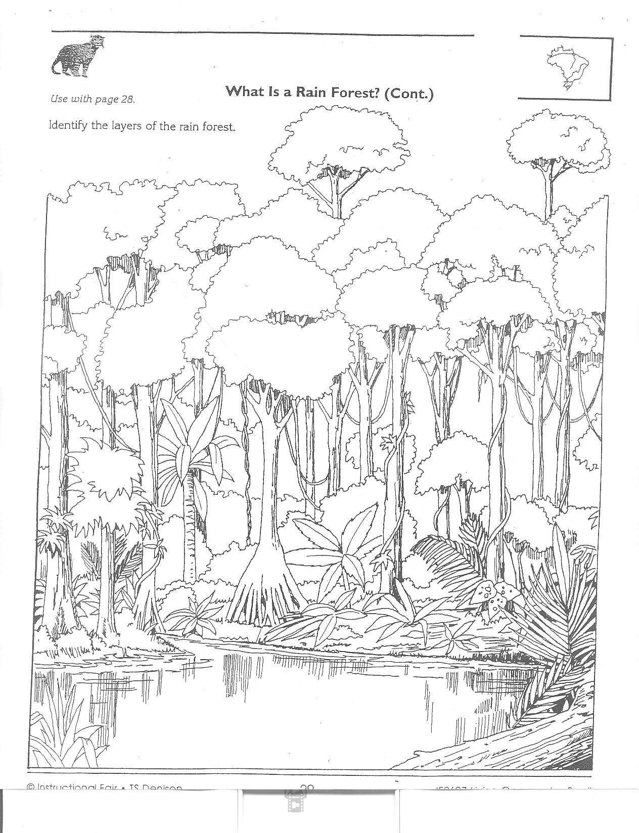 Rainforest Worksheets Free Rainforest Layers Worksheet