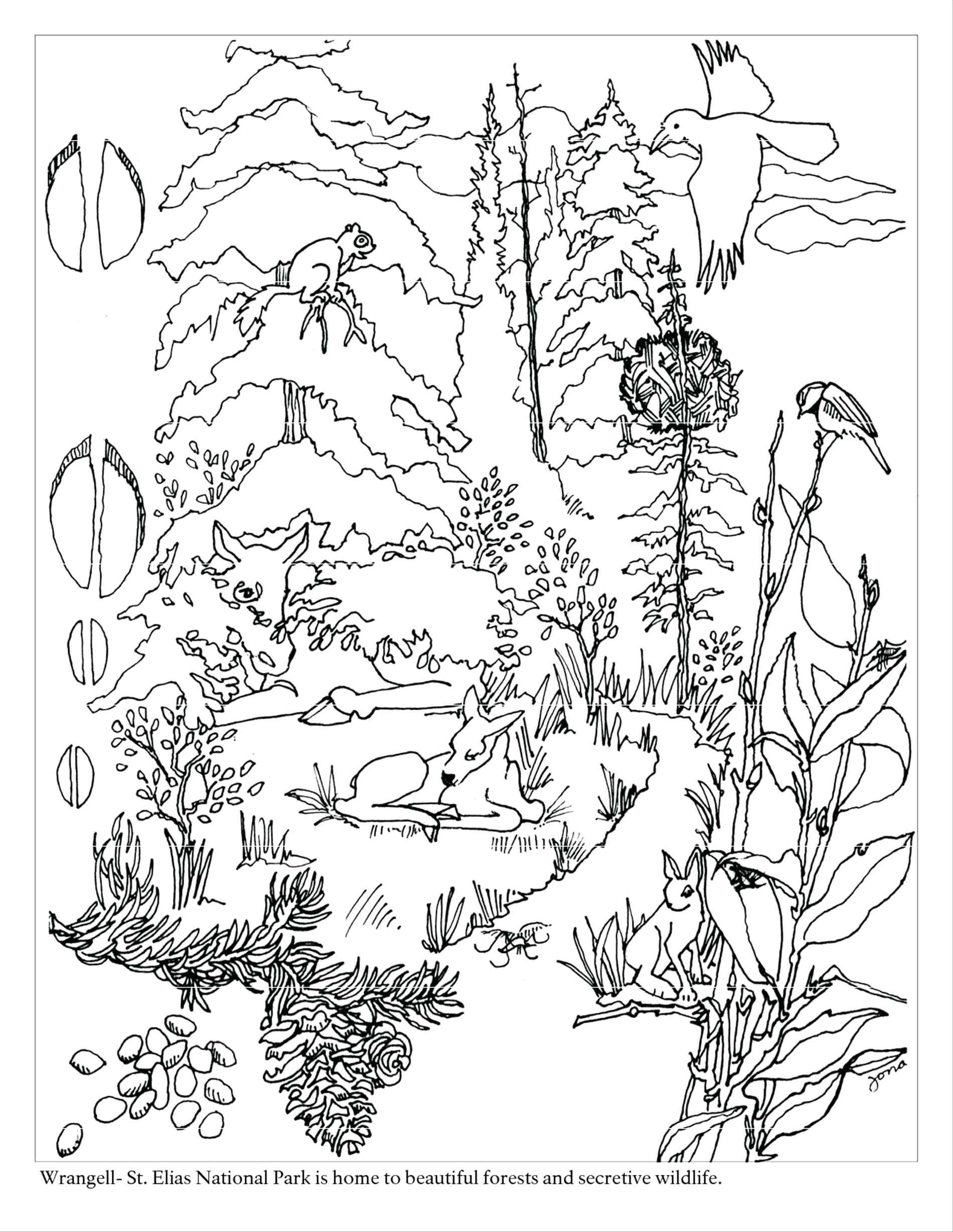 Rainforest Worksheets Free the Best Free Rainforest Coloring From Night