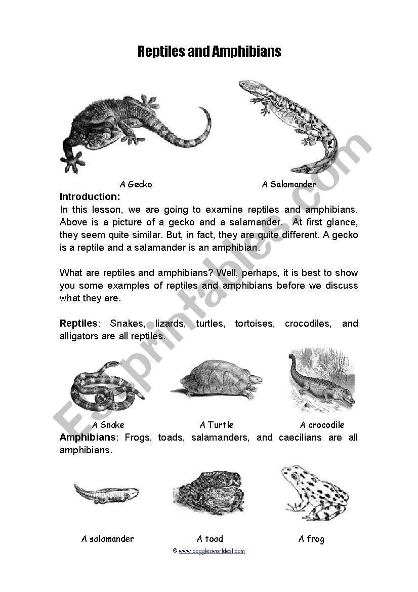 Reptiles Worksheets for Kindergarten Amiphians and Reptiles Esl Worksheet by Jgatti