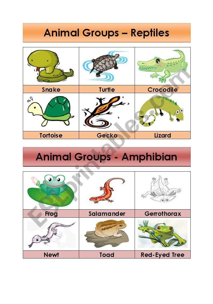 Reptiles Worksheets for Kindergarten Animal Groups Reptiles and Amphibians 5 5 Esl Worksheet