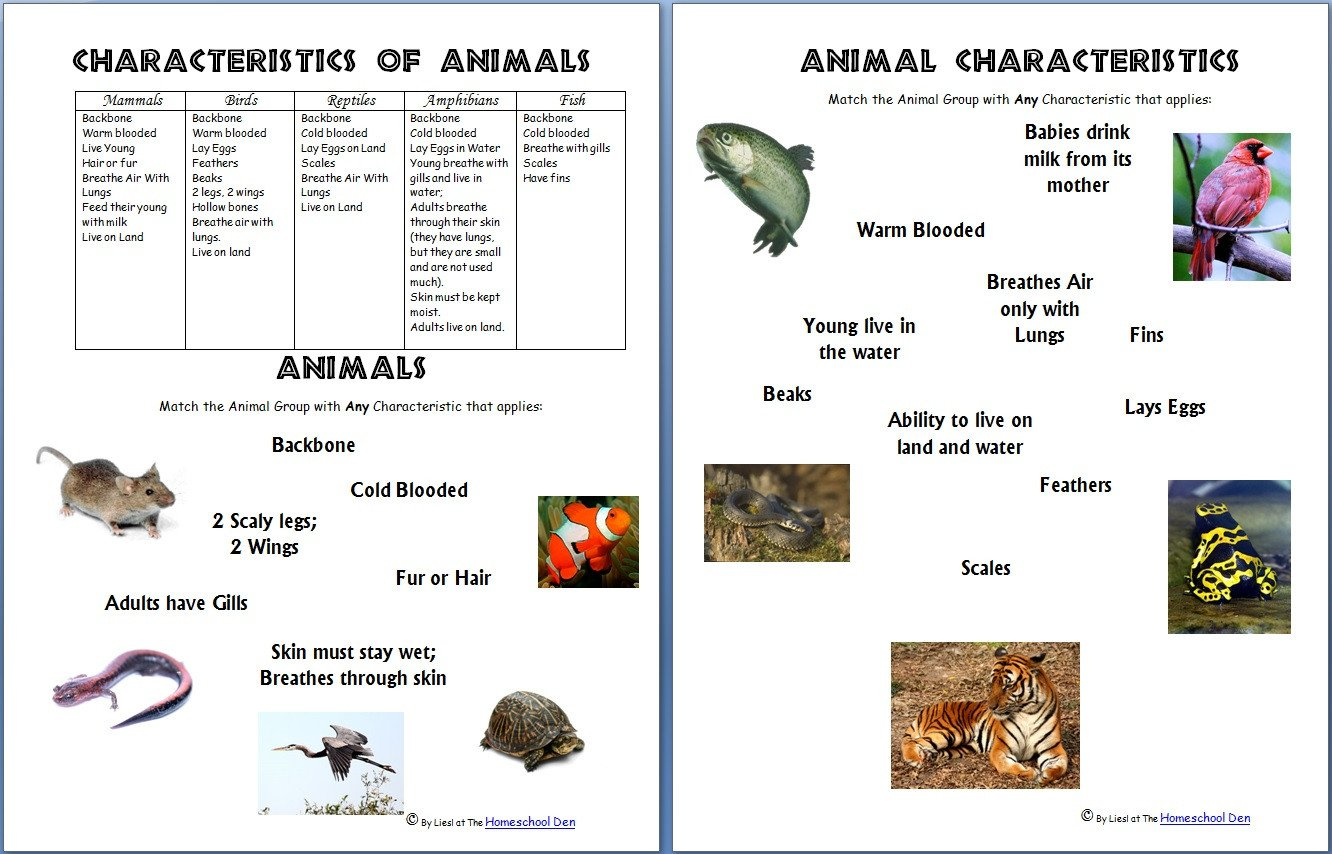 Reptiles Worksheets for Kindergarten Animals and their Characteristics Free Worksheet