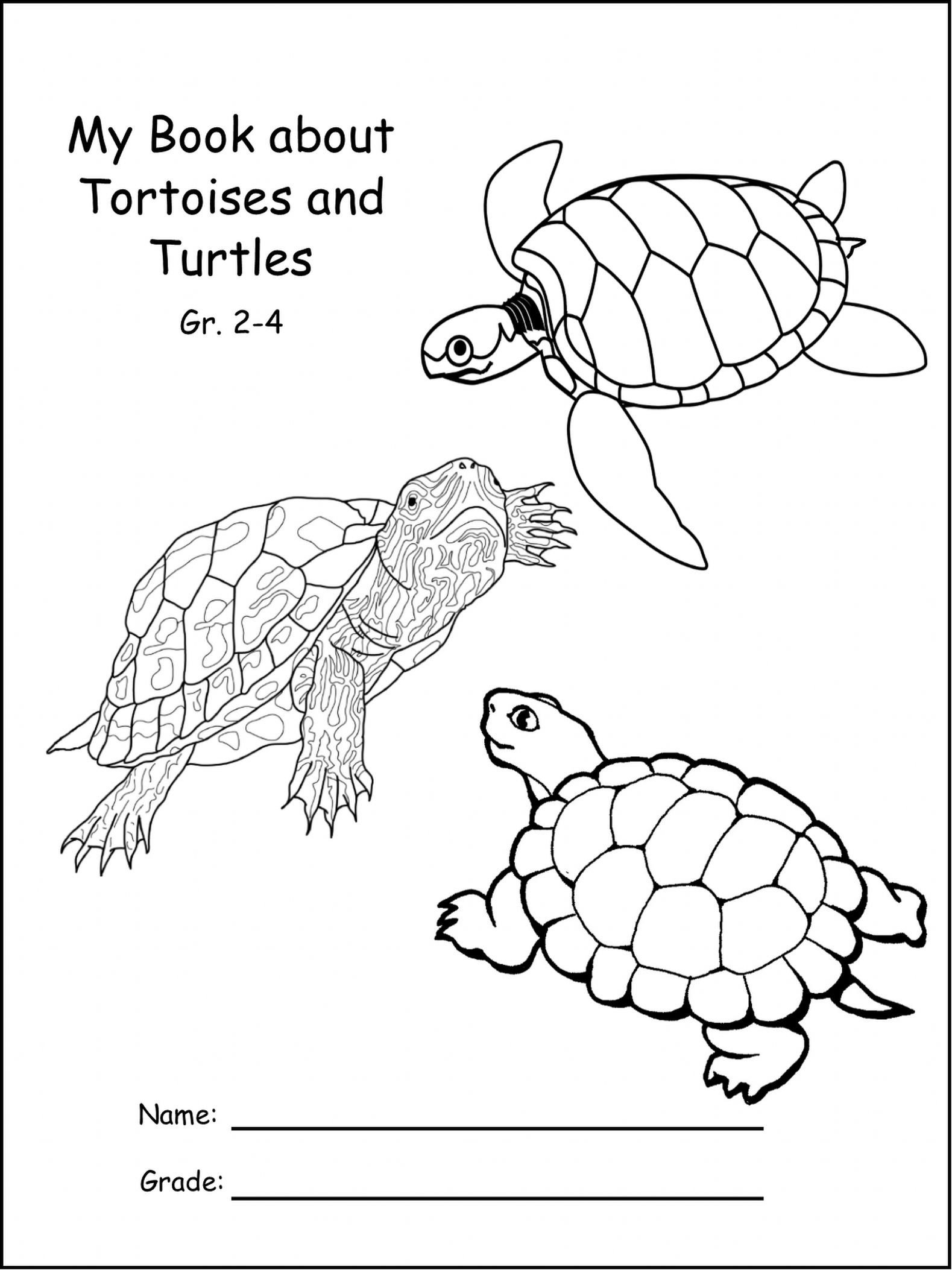 Reptiles Worksheets for Kindergarten Differences Between Sea Turtles and Land tortoises with
