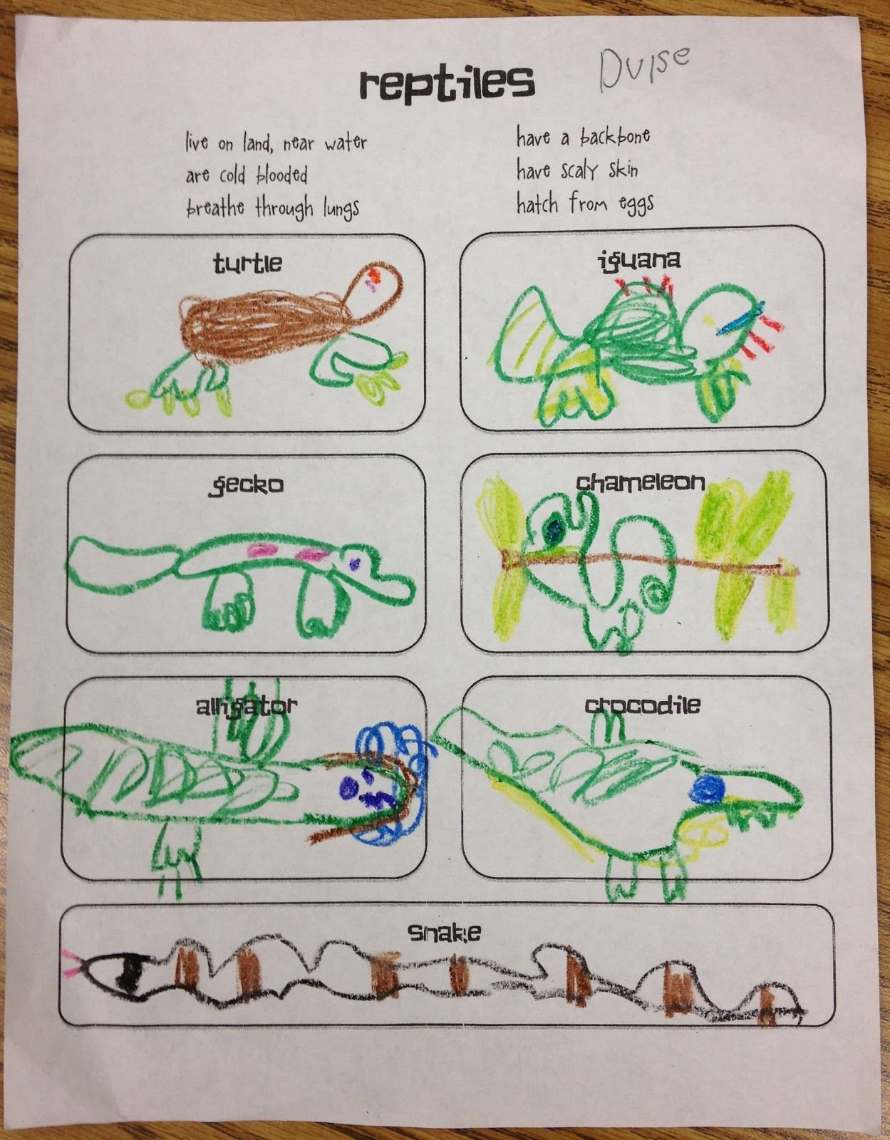 Reptiles Worksheets for Kindergarten Gallery for Examples Amphibians for Kids