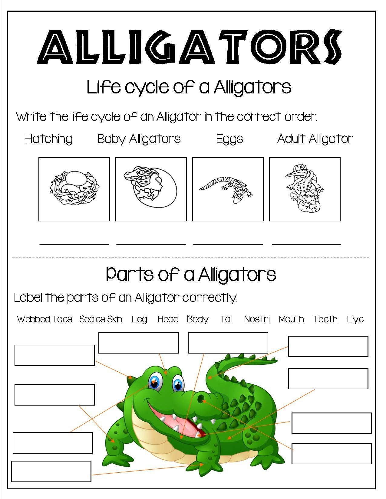 Reptiles Worksheets for Kindergarten Grade 1 and Grade 2 Students Can Learn About Reptiles All