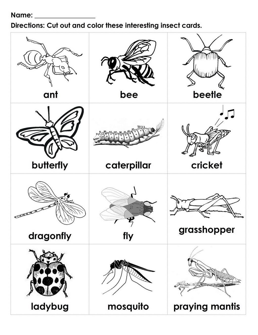 Reptiles Worksheets for Kindergarten Pin by Carissa Bock On Kids