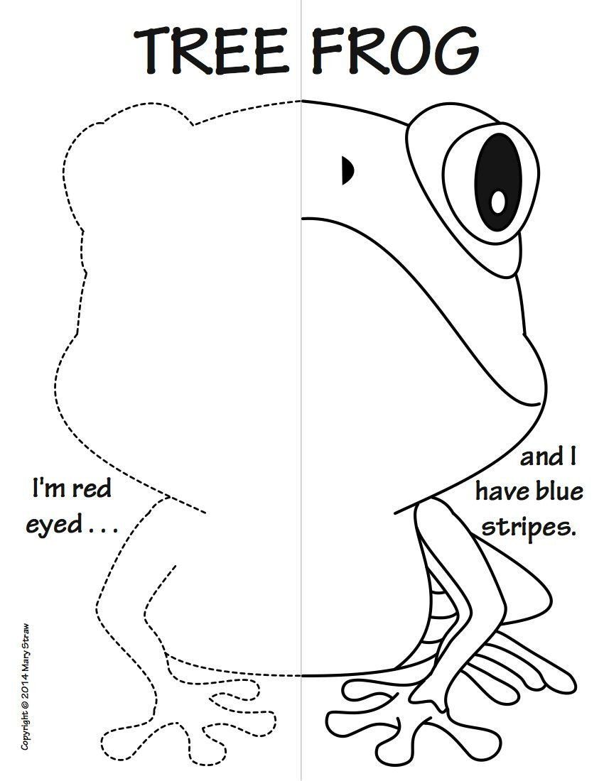 Reptiles Worksheets for Kindergarten Reptiles and Amphibians Symmetry Activity Coloring Pages
