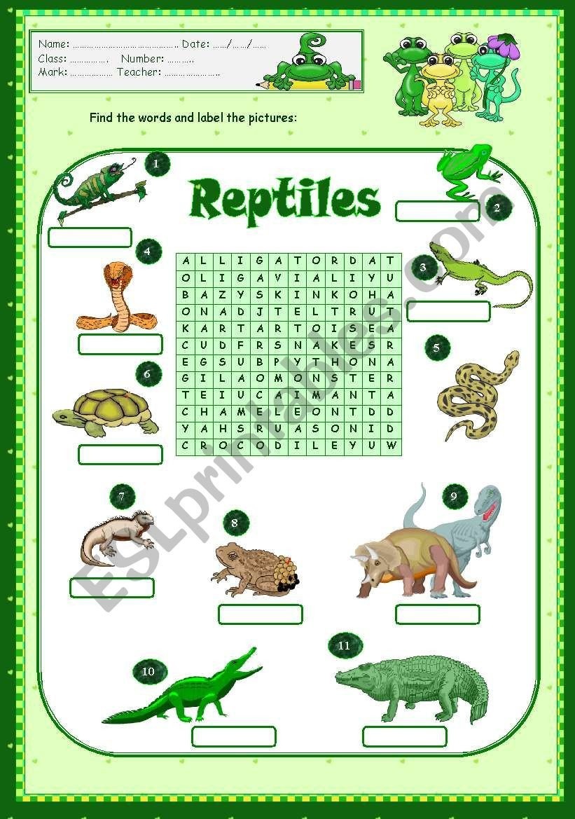 Reptiles Worksheets for Kindergarten Reptiles Esl Worksheet by Vanda51