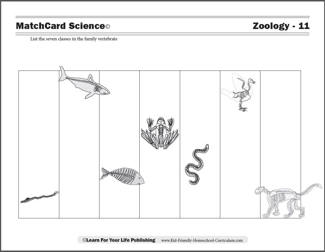 Reptiles Worksheets for Kindergarten Vertebrate Worksheets for Kids