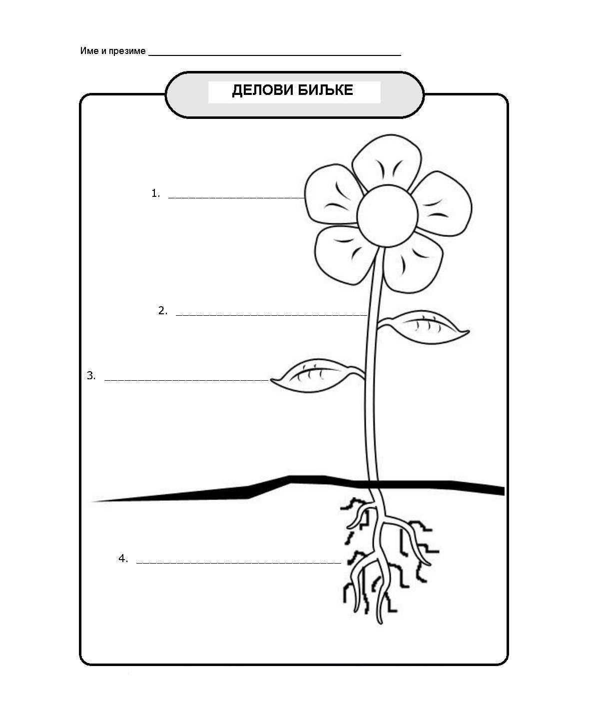 Science Worksheet 1st Grade °Å¸ñ€°²°¸ ñ€°°°·ñ€°µ°´ Reading