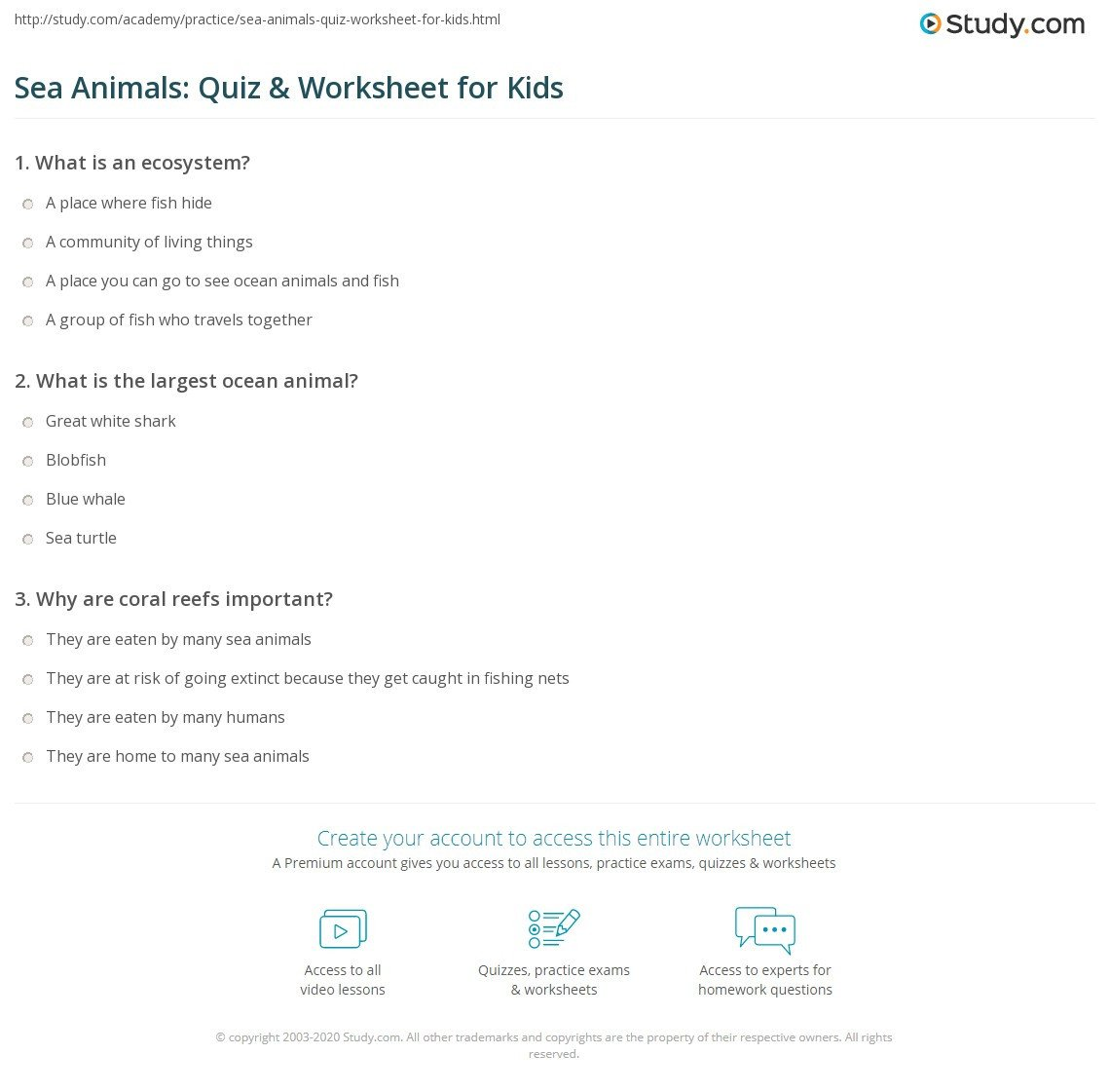 Sea Animal Worksheets Sea Animals Quiz & Worksheet for Kids