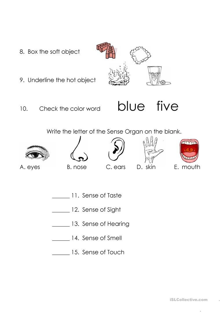 Sense organs Worksheets Sense organs English Esl Worksheets for Distance Learning