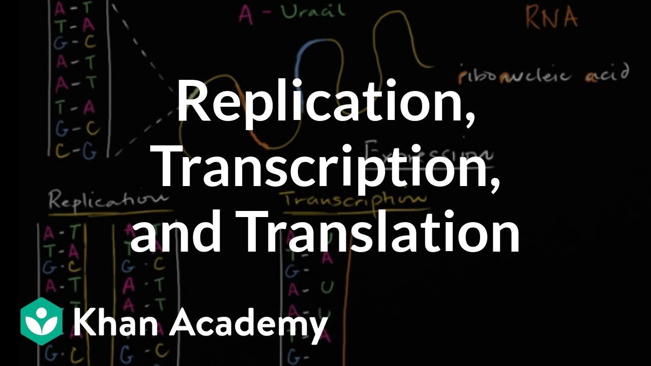Skills Worksheet Dna Structure Dna Replication and Rna Transcription and Translation Video