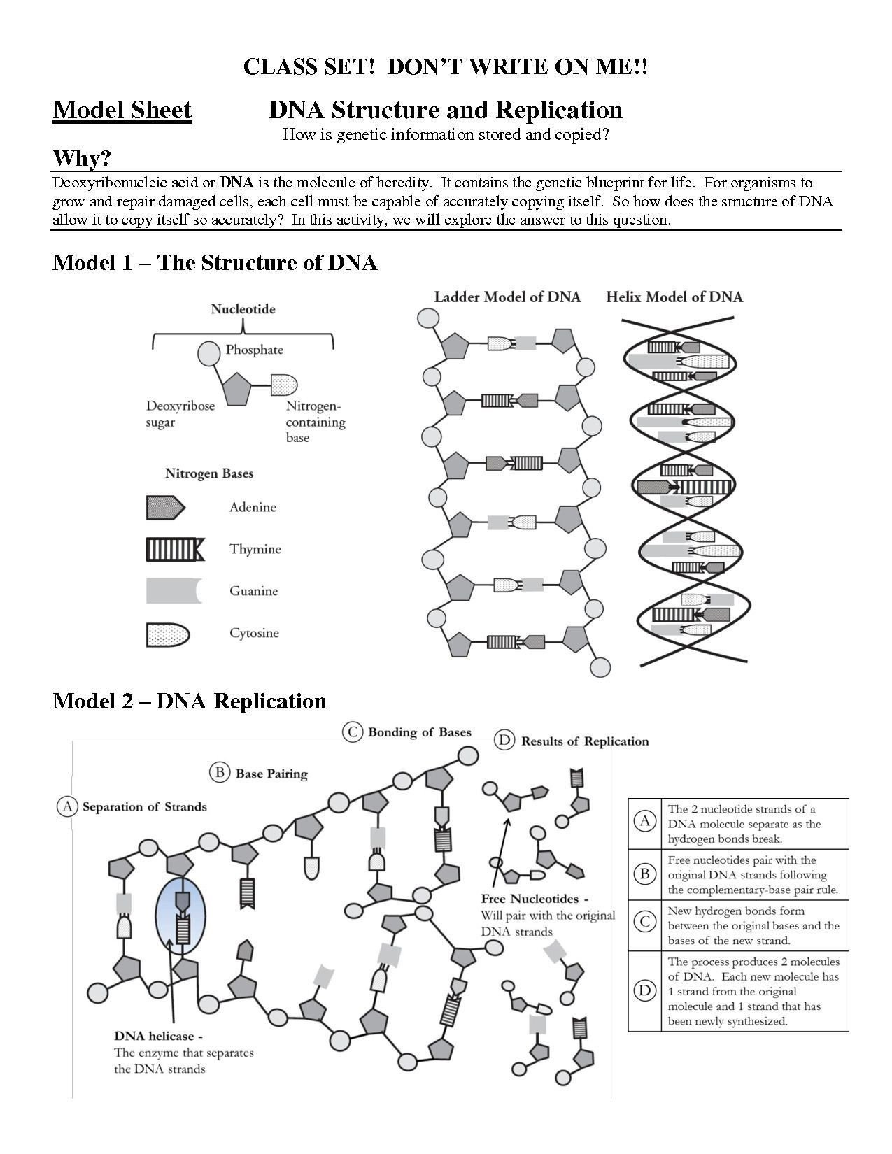 Skills Worksheet Dna Structure Inspirational Structure Dna and Replication Worksheet