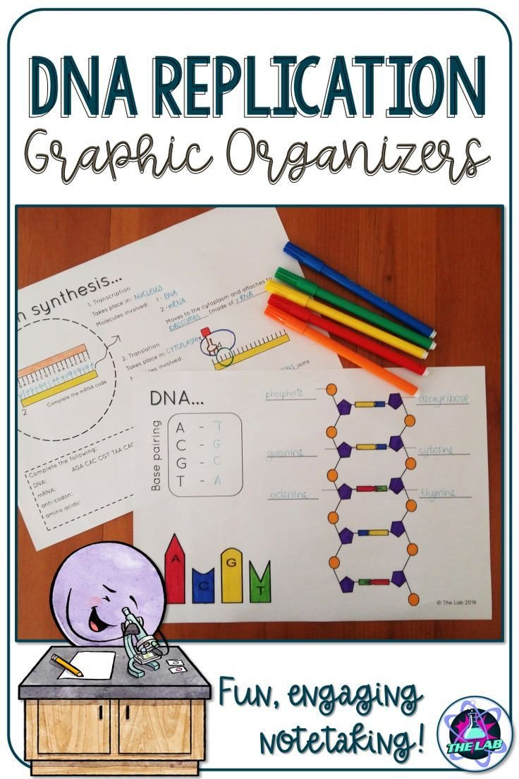 Skills Worksheet Dna Structure Use these Dna Replication Graphic organizers to Help Your