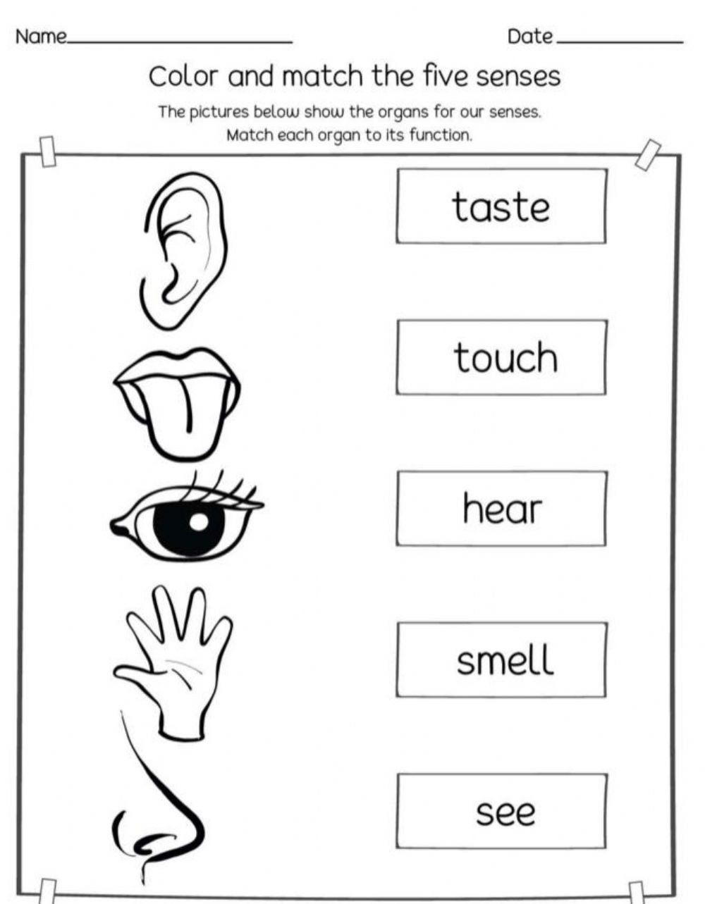 The Five Senses Worksheets 5 Sense Interactive Worksheet