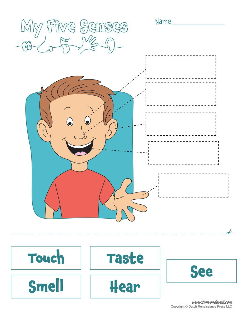 The Five Senses Worksheets Five Senses Worksheet Tim S Printables