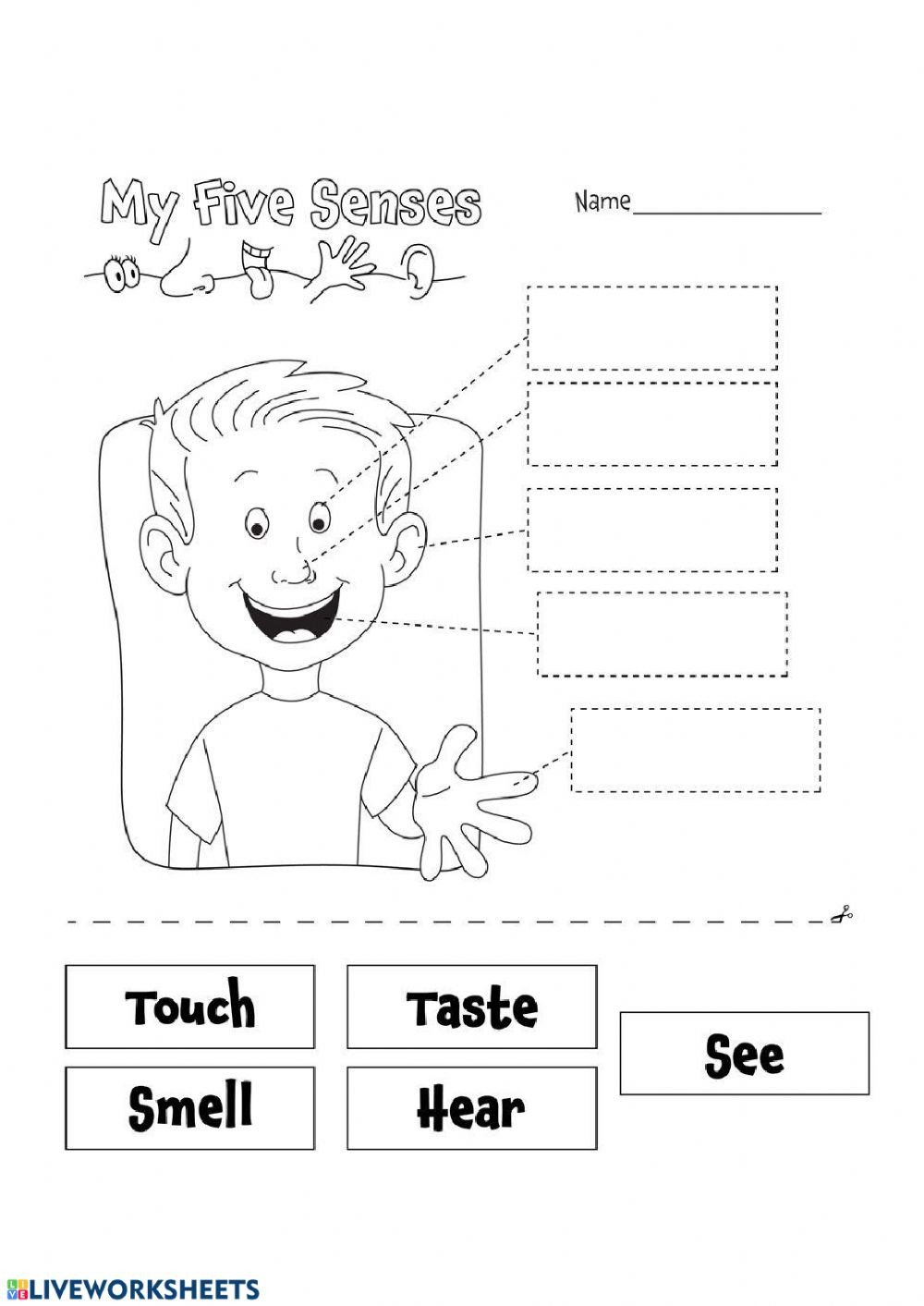 The Five Senses Worksheets My Five Senses Interactive Worksheet