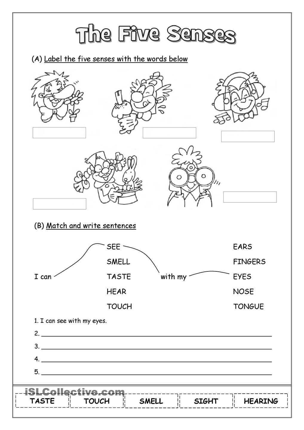 The Five Senses Worksheets the Five Senses