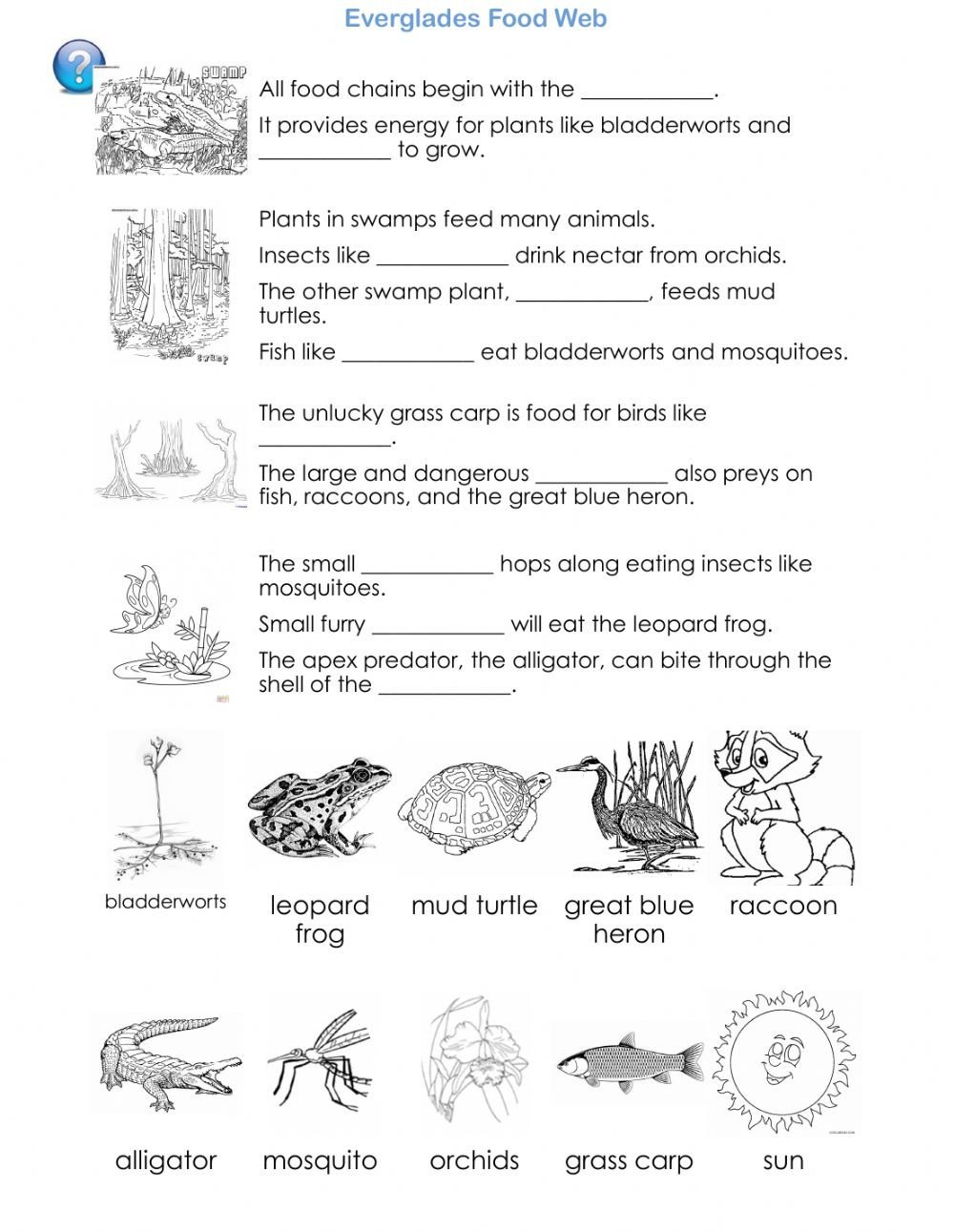 Animal Food Chain Worksheet Everglades Food Web Science Reading Interactive Worksheet