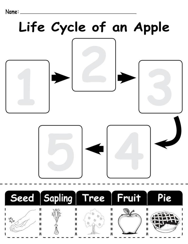 life 20Cycle 20of 20an 20apple 1024x1024