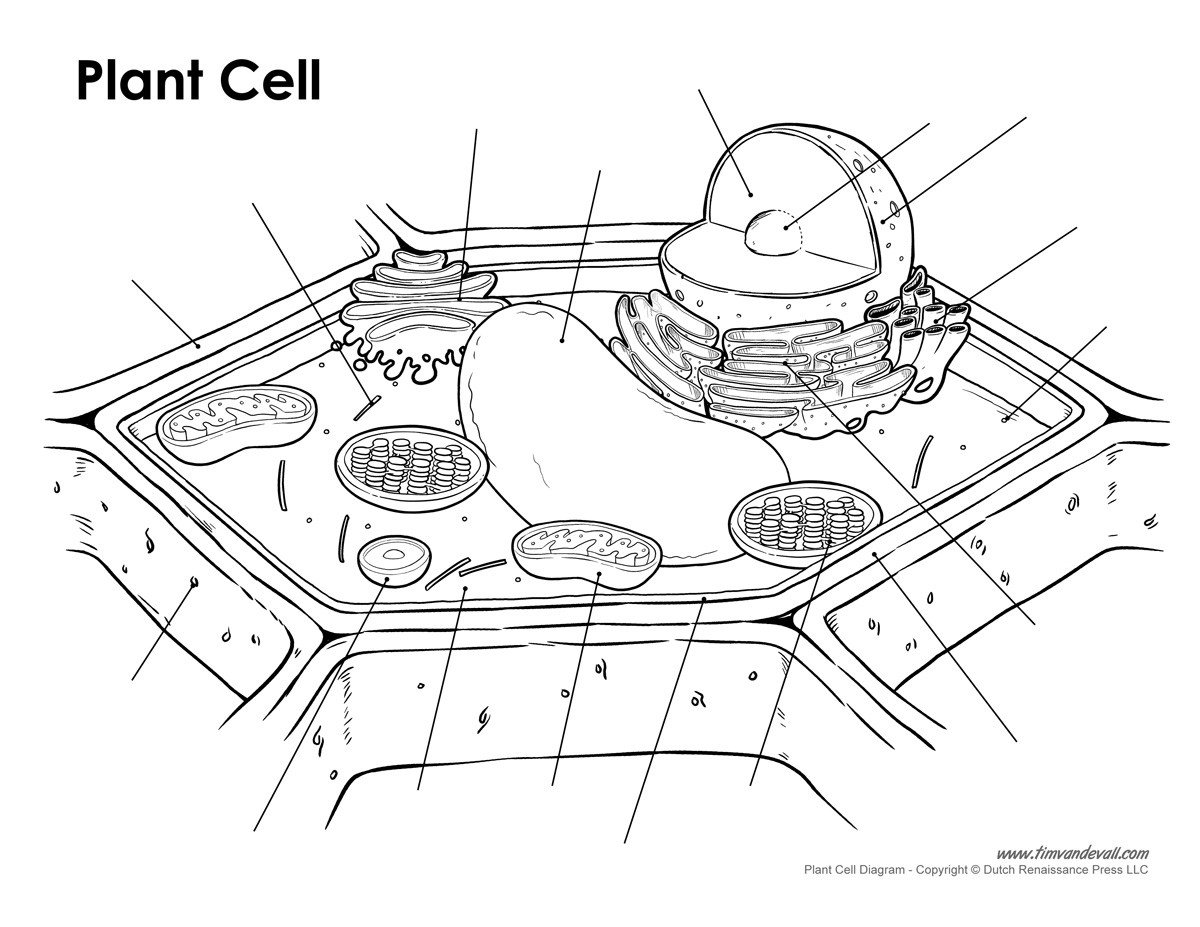 Blank Animal Cell Diagram Worksheet Plant Cell Diagram Unlabeled Tim S Printables