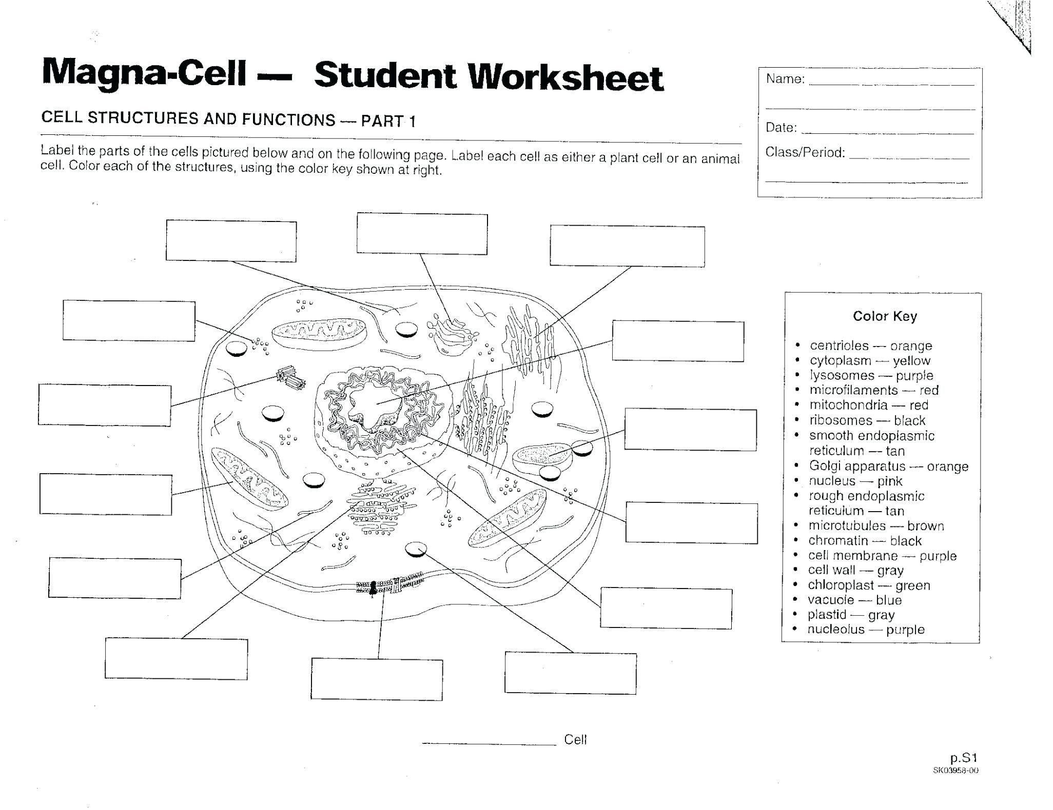 Cell Coloring Worksheet Answers 28 New Animal Cells Coloring Worksheet In 2020