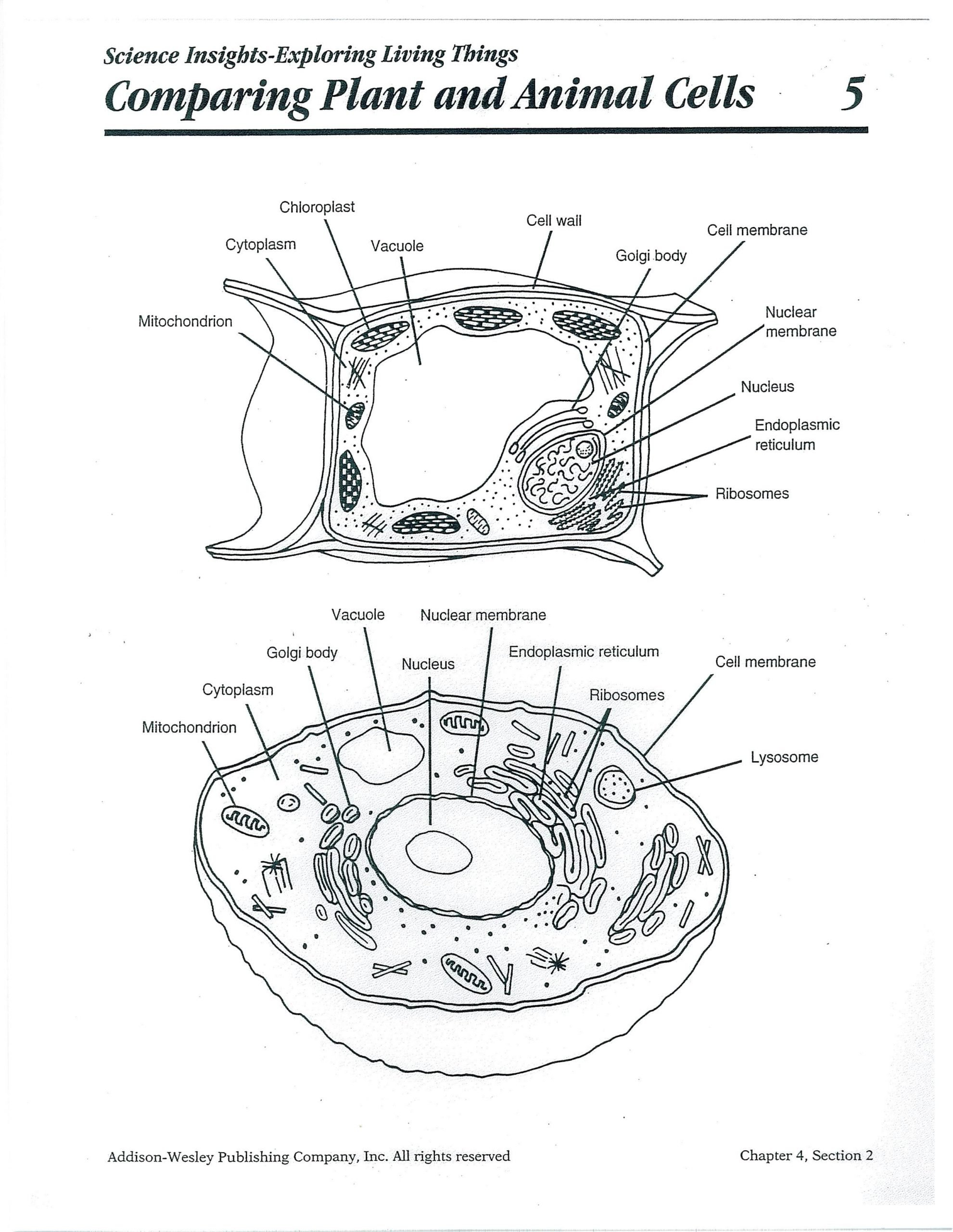 printable plant and animal cell plant and animal cell diagram