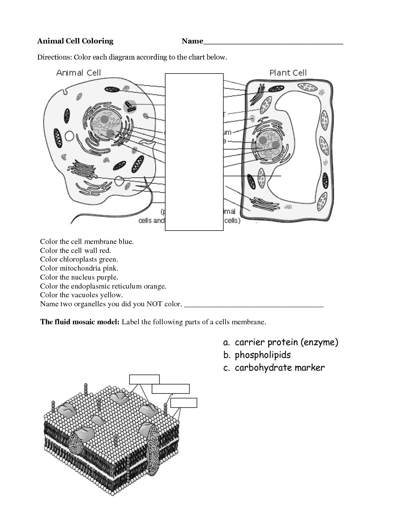 plant cell coloring sheet answer key 46 animal and plant cells