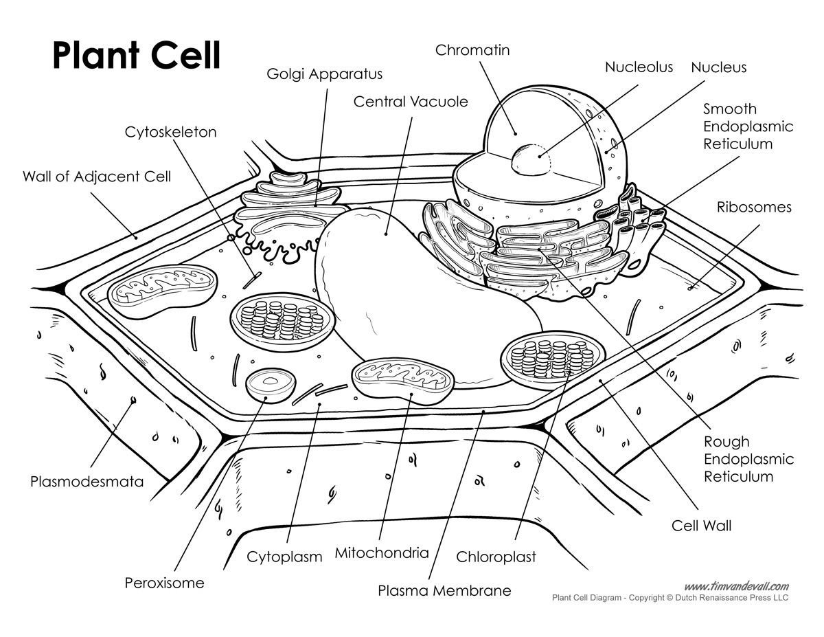 Cell organelle Coloring Worksheet Cell Membrane Coloring Worksheet Finished