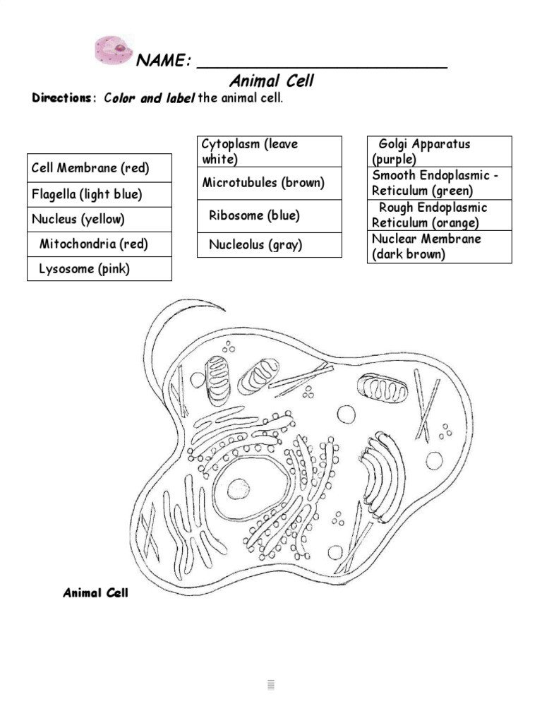 Cell organelle Coloring Worksheet Copy Of 8 organelles Coloring Worksheet