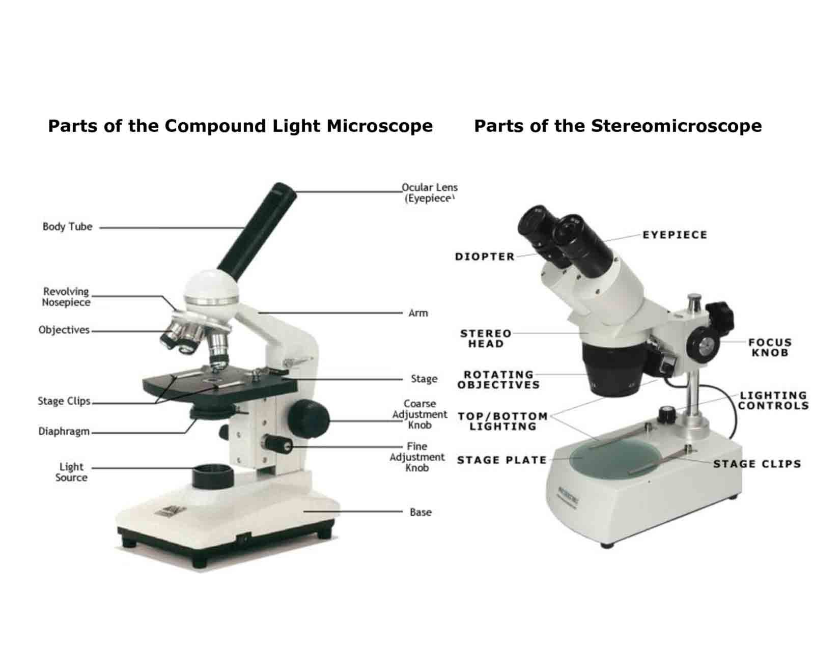 Color the Microscope Parts Worksheet Parts A Microscope Worksheet Answers Promotiontablecovers