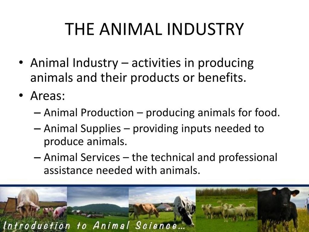 THE ANIMAL INDUSTRY Animal Industry – activities in producing animals and their products or benefits