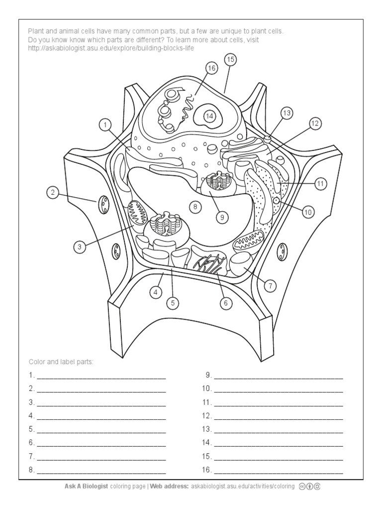 Label the Animal Cell Worksheet Aab Plant Cell Worksheet