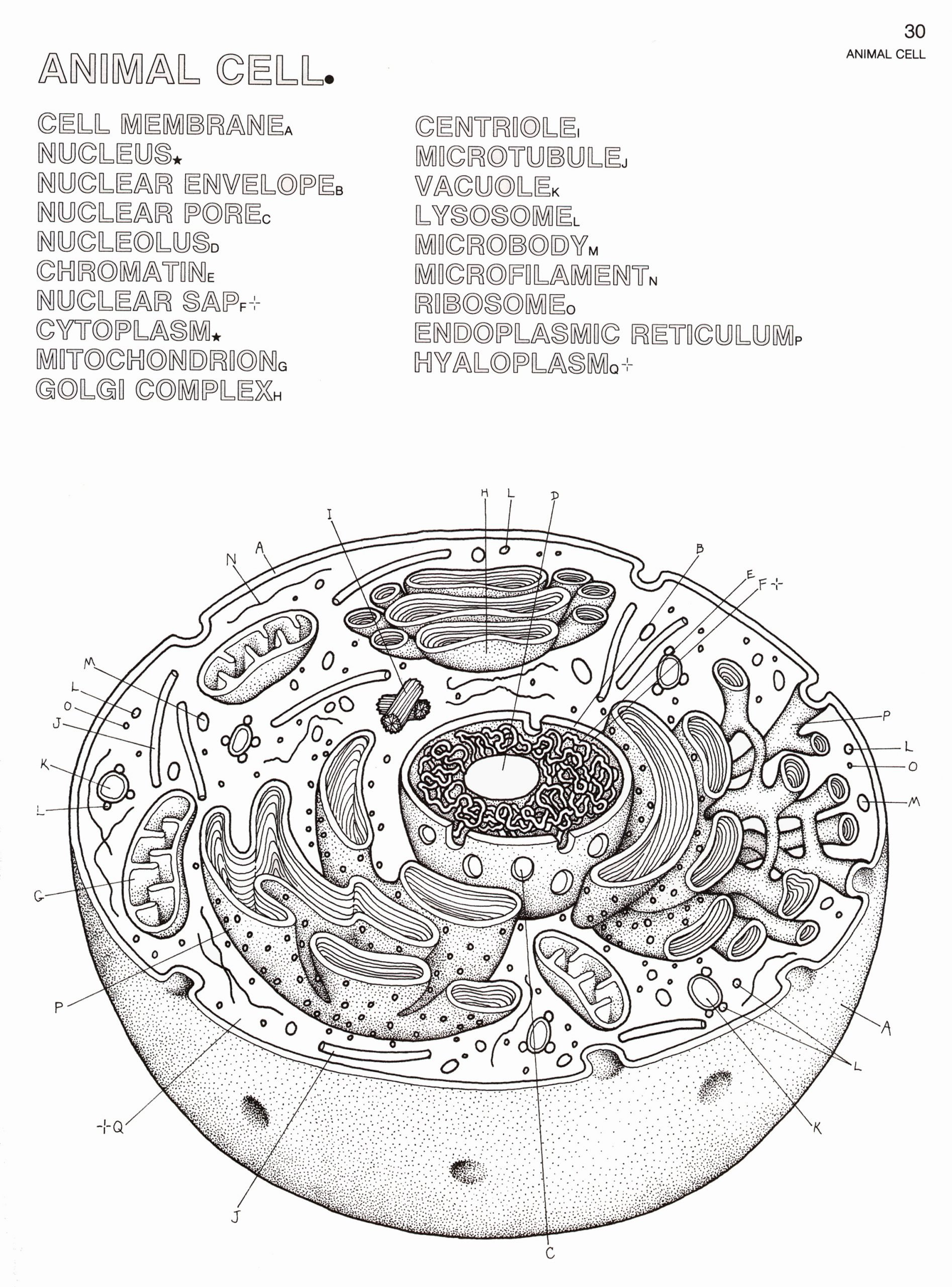 label animal and plant cell worksheet 6