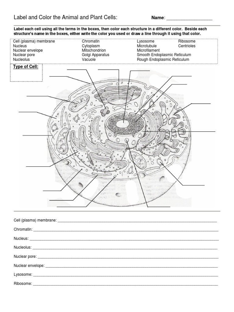 Labeling An Animal Cell Worksheet Label and Color the Animal and Plant Cells