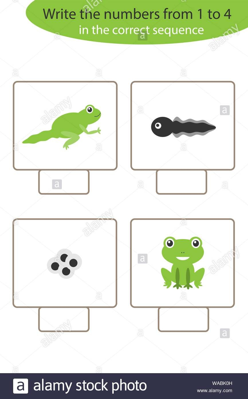 Life Cycles Of Animals Worksheets Visual Game with Frog Life Cycle for Kids Educational Task