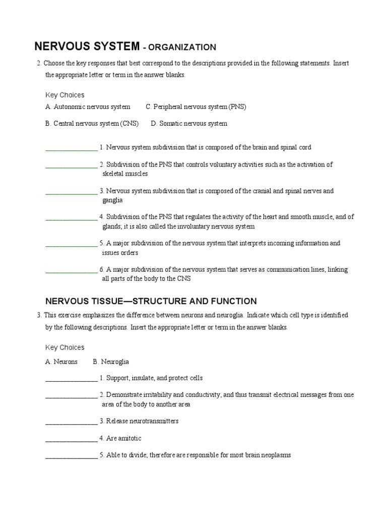 Nervous System Coloring Worksheet A&p Coloring Nervous Worksheet Pdf