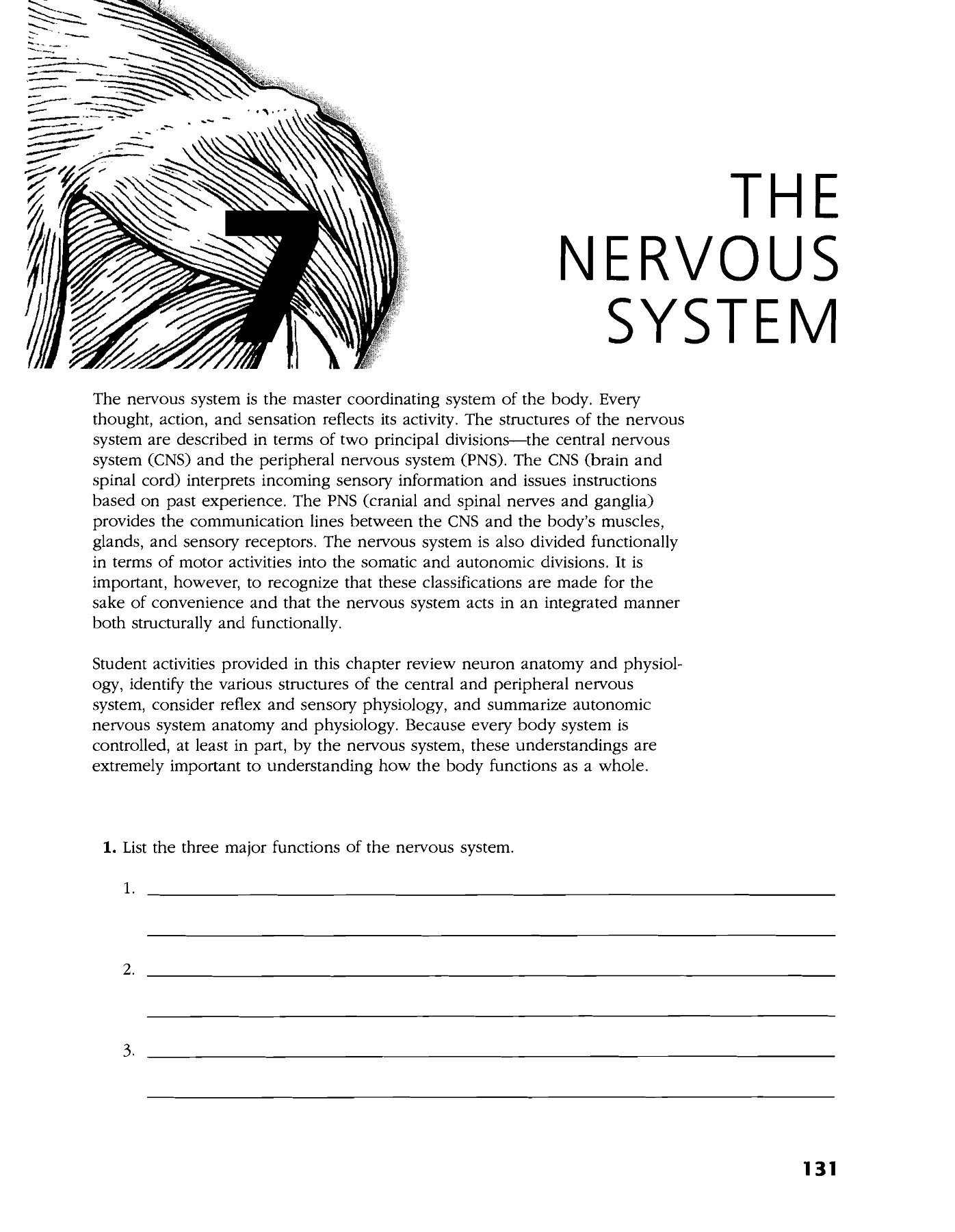 Nervous System Coloring Worksheet the Nervous System Lake County Schools Overview Pages 1