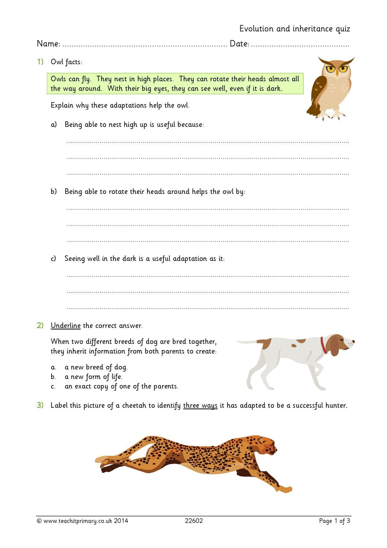 adaptation ks2 worksheet