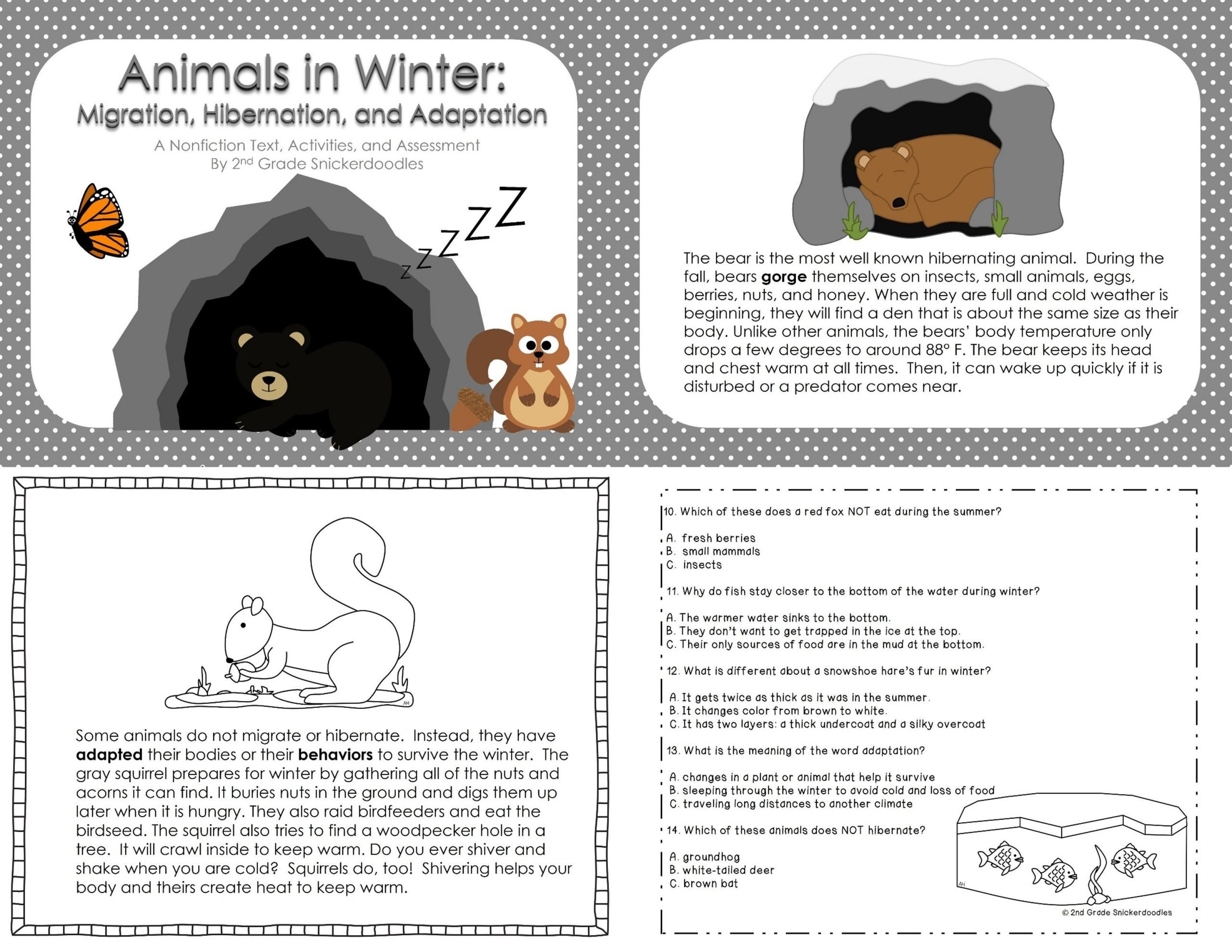 Plant and Animal Adaptations Worksheet Animals In Winter Migration Hibernation and Adaptation