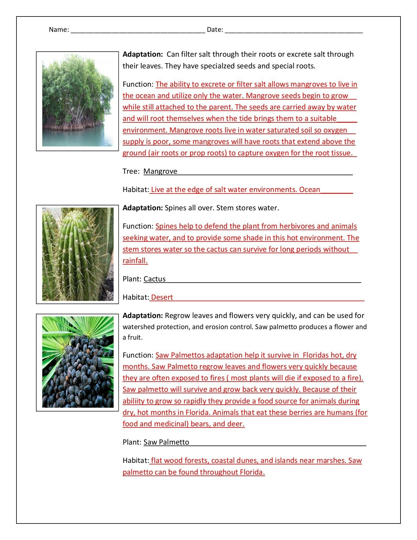 Plant and Animal Adaptations Worksheet Functions Of Animal Adaptations Answer Key Pages 1 3