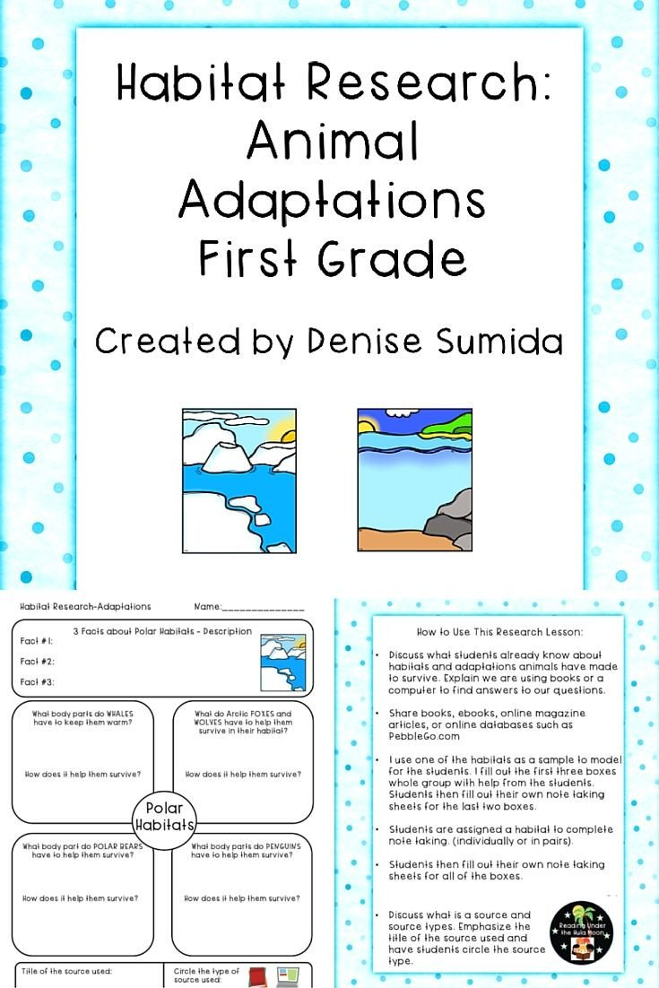 Plant and Animal Adaptations Worksheet Habitat Research Animal Adaptations First Grade