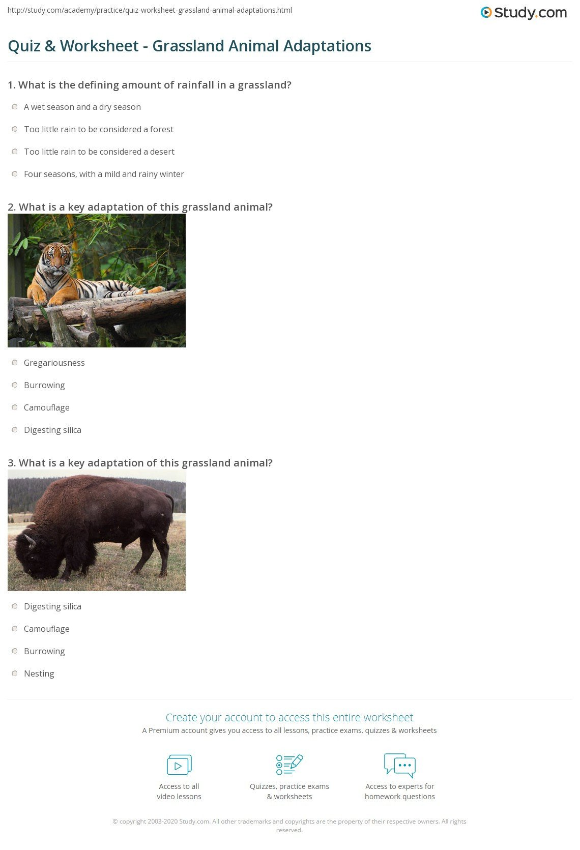 quiz worksheet grassland animal adaptations