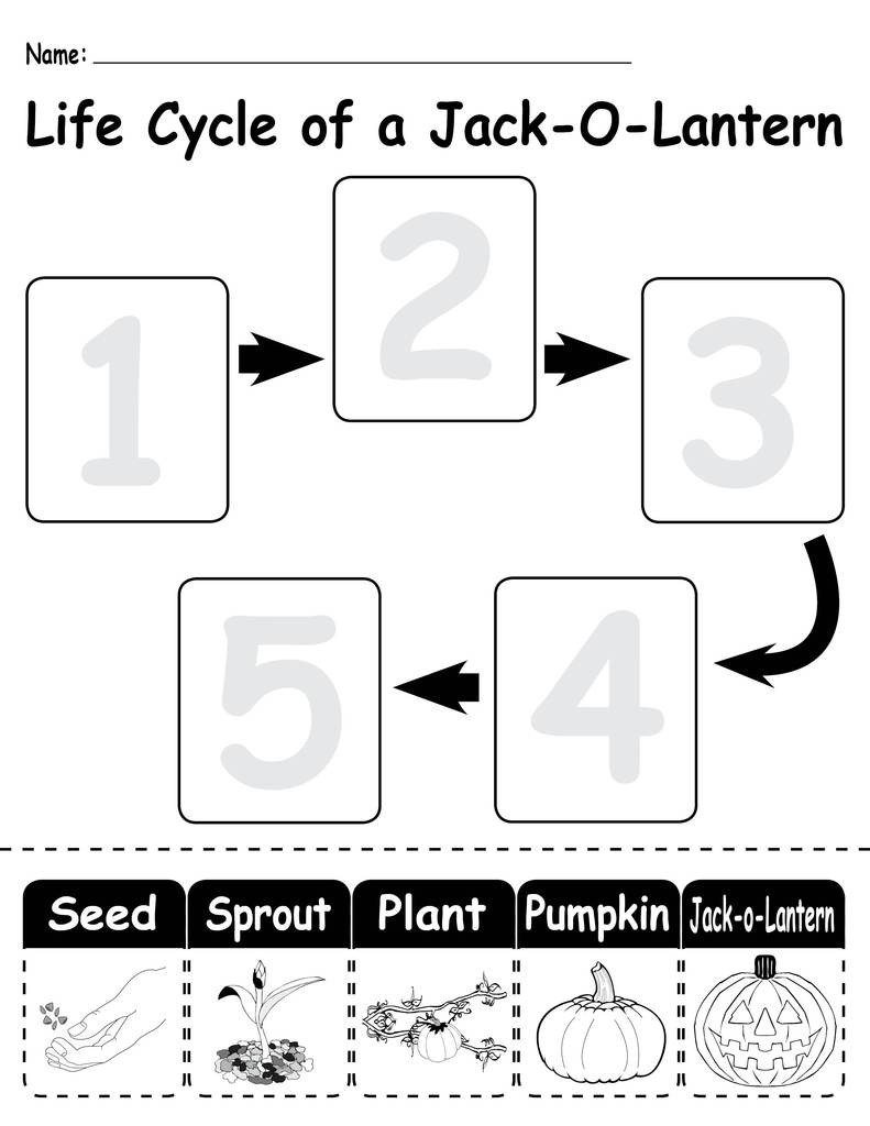 "Pumpkin Worksheets for Kindergarten 3 ""life Cycle Of A Pumpkin"" Printable Worksheets"
