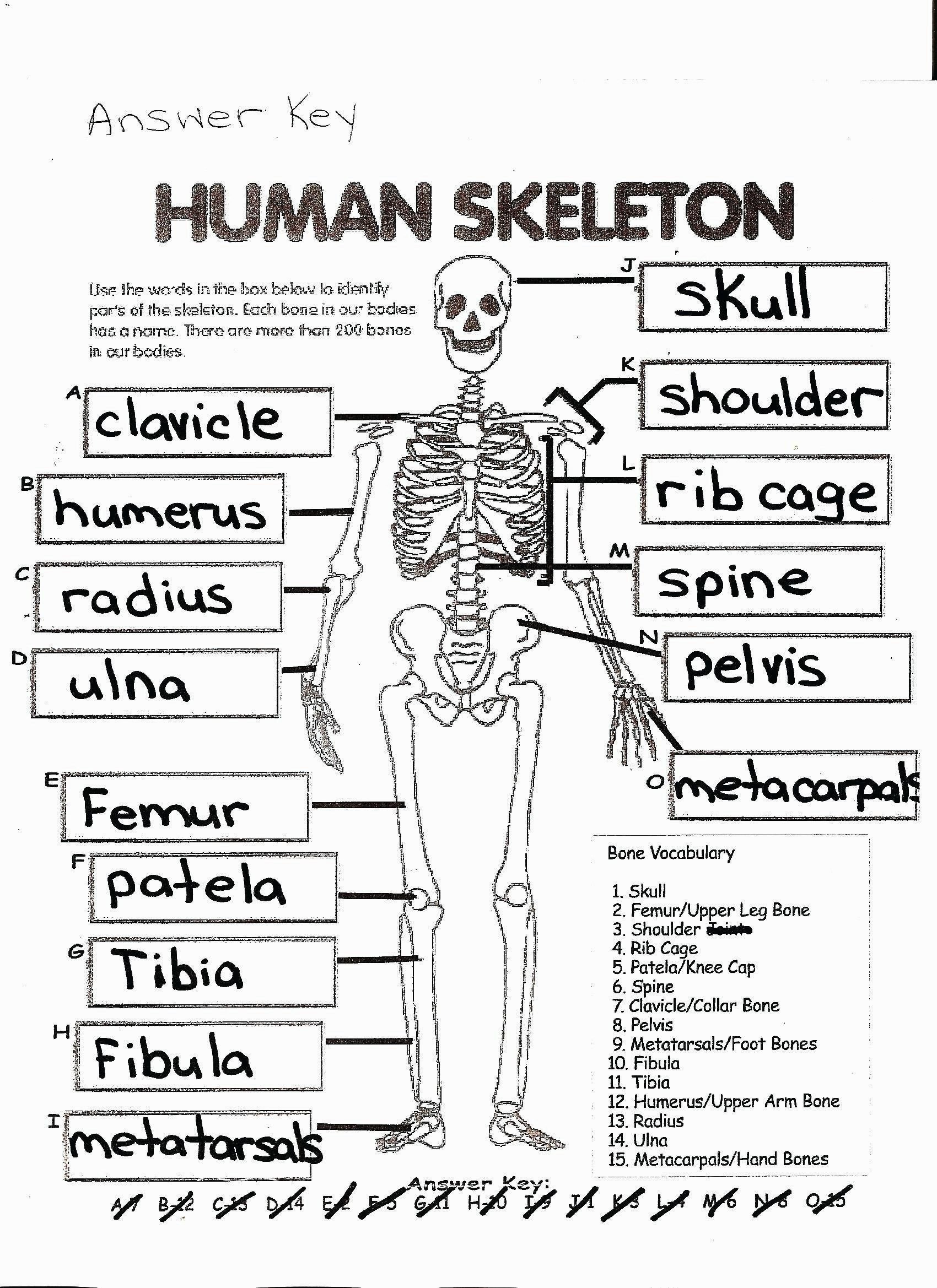 Skeleton Worksheets for Kindergarten Free Printablemy Coloring Pages for Kids to Print Christmas