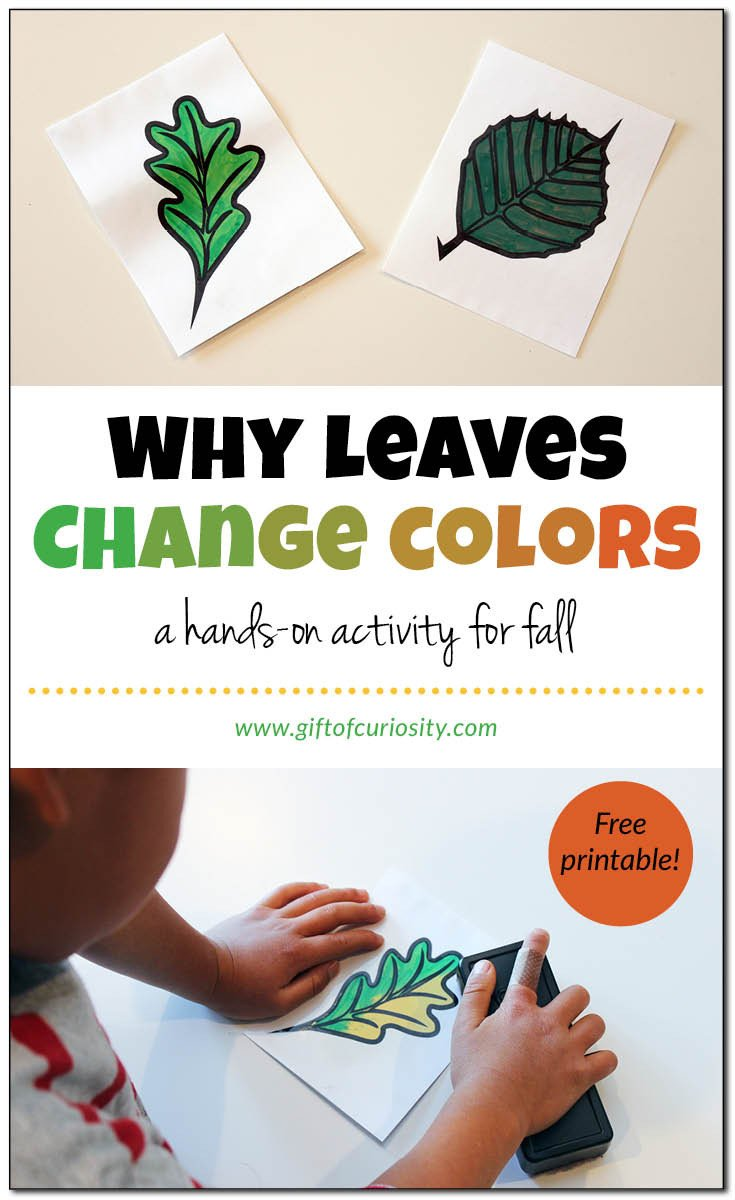 Why leaves change colors Gift of Curiosity
